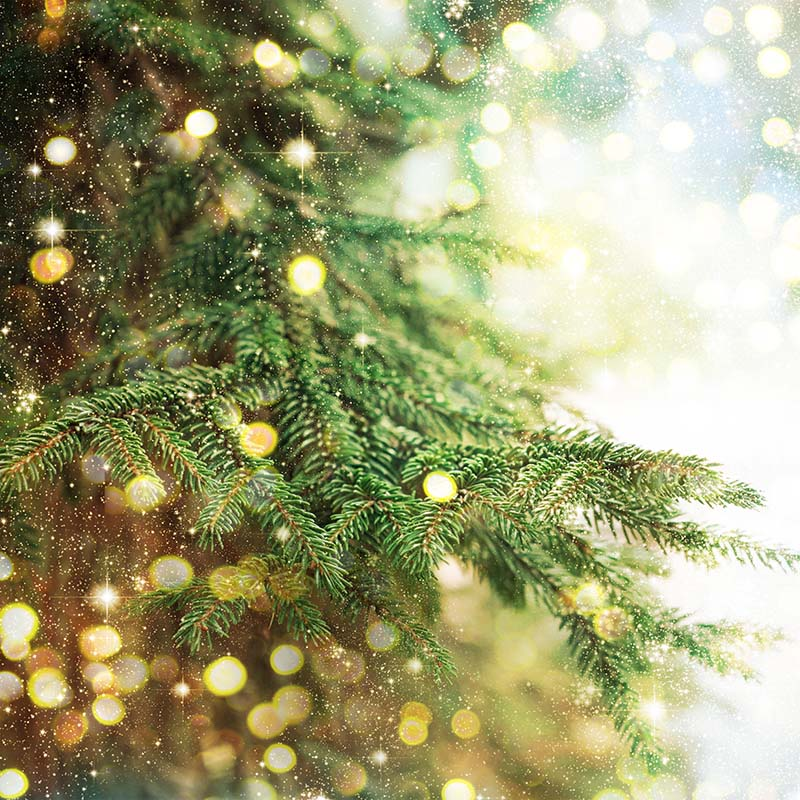 Christmas Event - Pine Tree